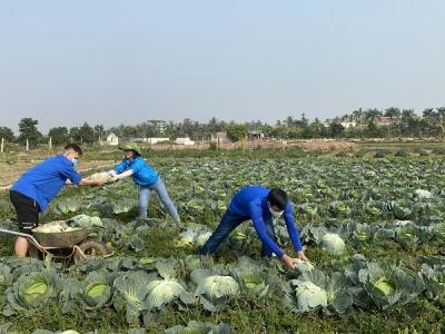 Đoàn viên thanh niên huyện Vĩnh Bảo tham gia hoạt động giải cứu nông sản cho người nông dân huyện Vĩnh Bảo